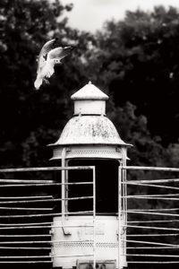 Concours photographique 2015 de Nogent sur Marne